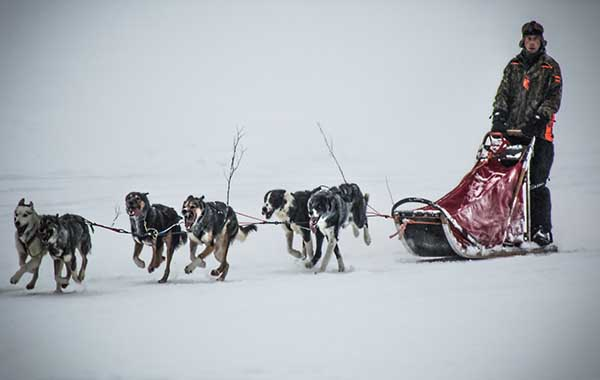 expedition by dogsled