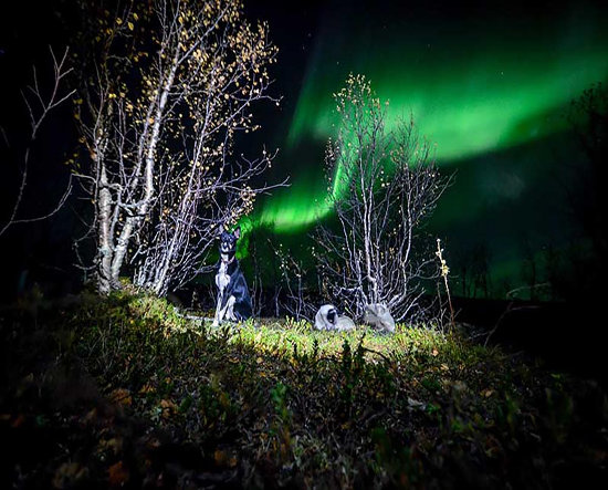 Northern Lights Dog Sledding
